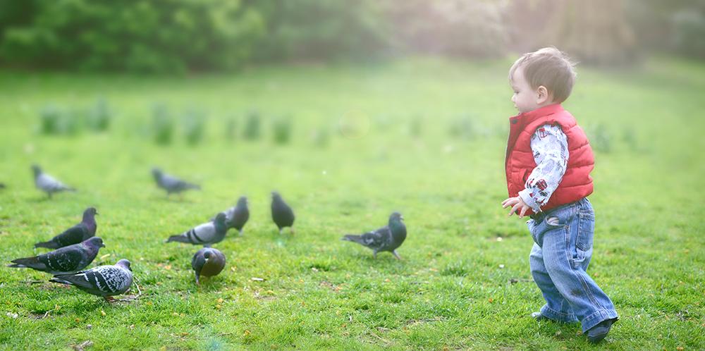Pigeon chasing!