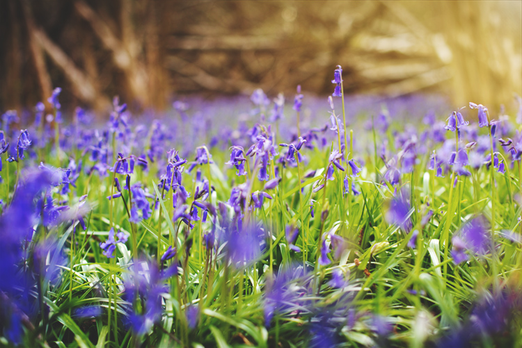 Bluebells photoshoot in Surrey and 5 Photography Tips